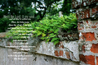 Old Brick Wall 1 Psalm 103